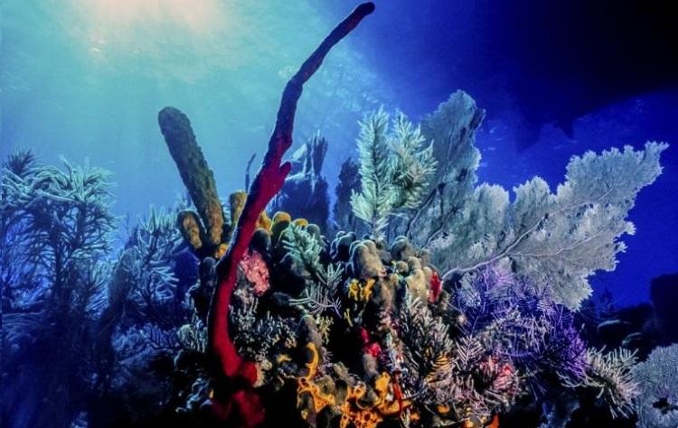 Arrecifes de coral en el Caribe