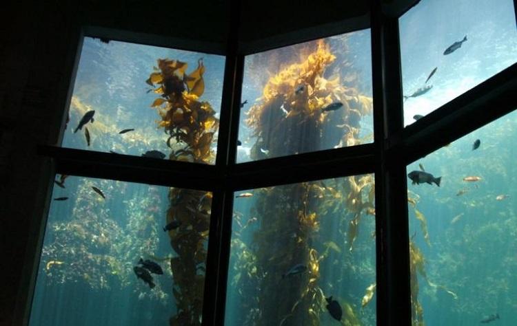 Bosques de algas gigantes en Alaska