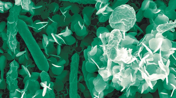 bacterias limpiando residuos nucleares