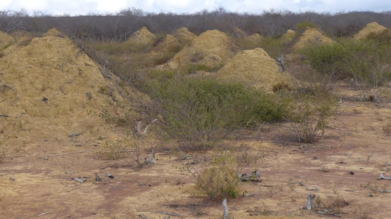 Hallada una metrópolis de 4000 años de antigüedad construida por termitas