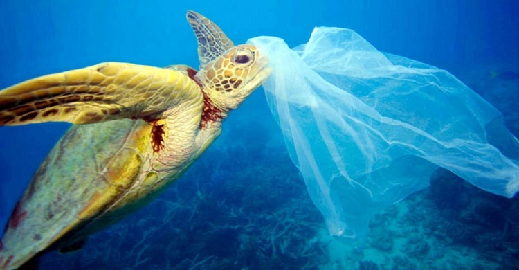 la falta de oxigeno y los plásticos afectan a la vida marina