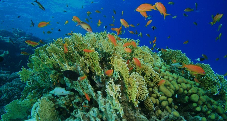proliferacion de algas consumen oxigeno y destruyen coral