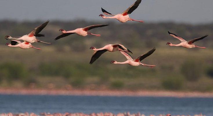 Cómo el cambio climático está cambiando los hábitos migratorios de las aves