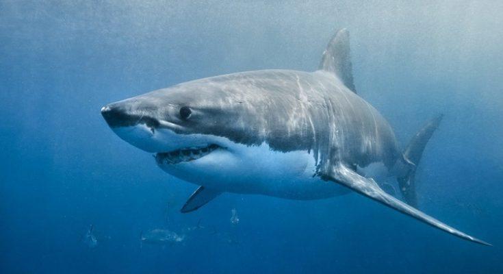 ADN de Tiburón contra el Cáncer