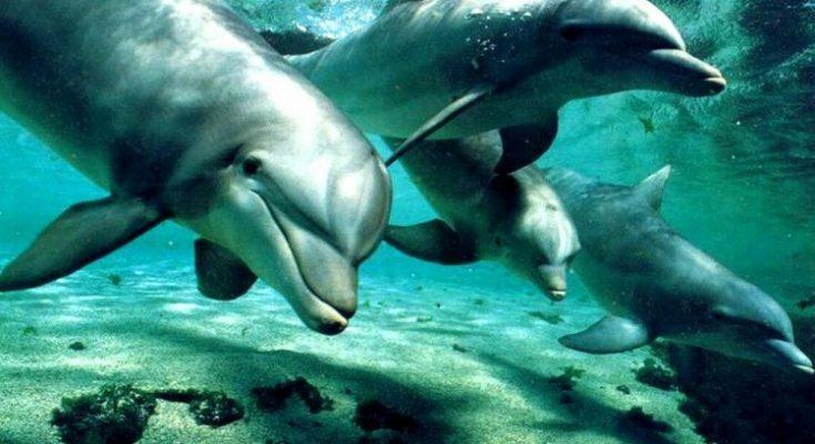 Los cerebros de los delfines, contaminados por plásticos