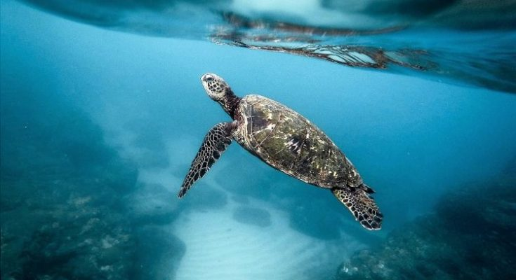 Qué mecanismo usan los animales para respirar bajo el agua