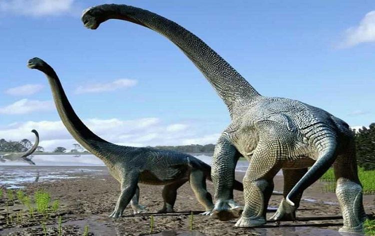 Descubiertos los restos de un dinosaurio de 24 toneladas que andaba sobre tacones